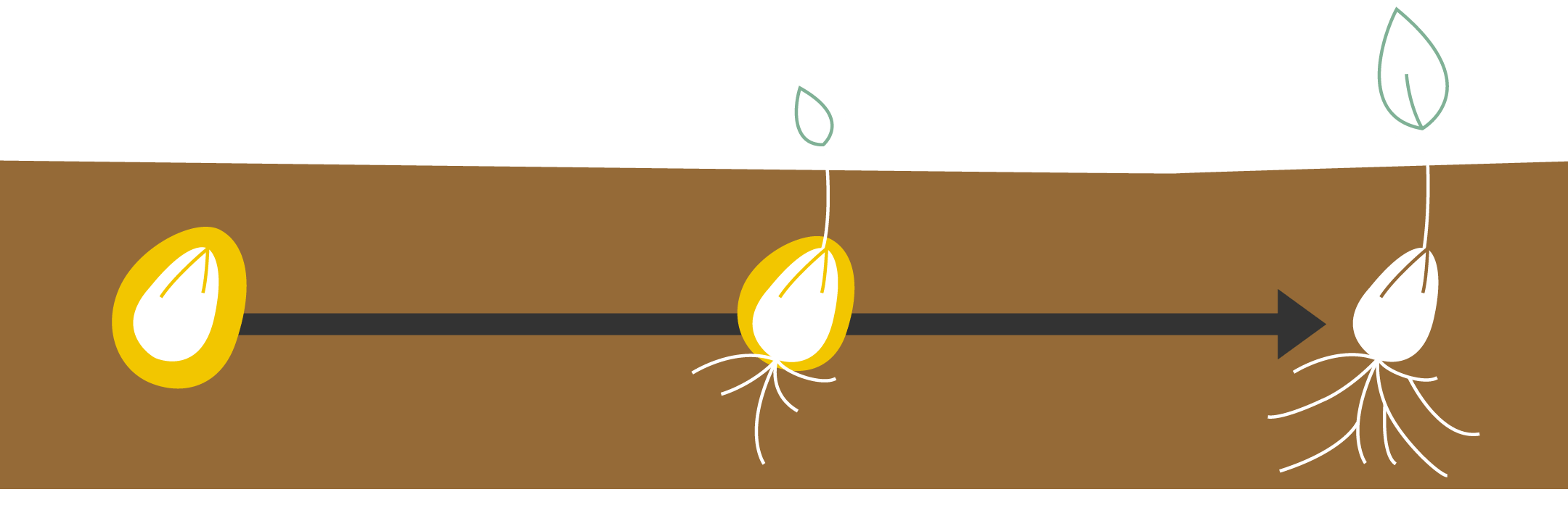 graphic plant development with seed treatment